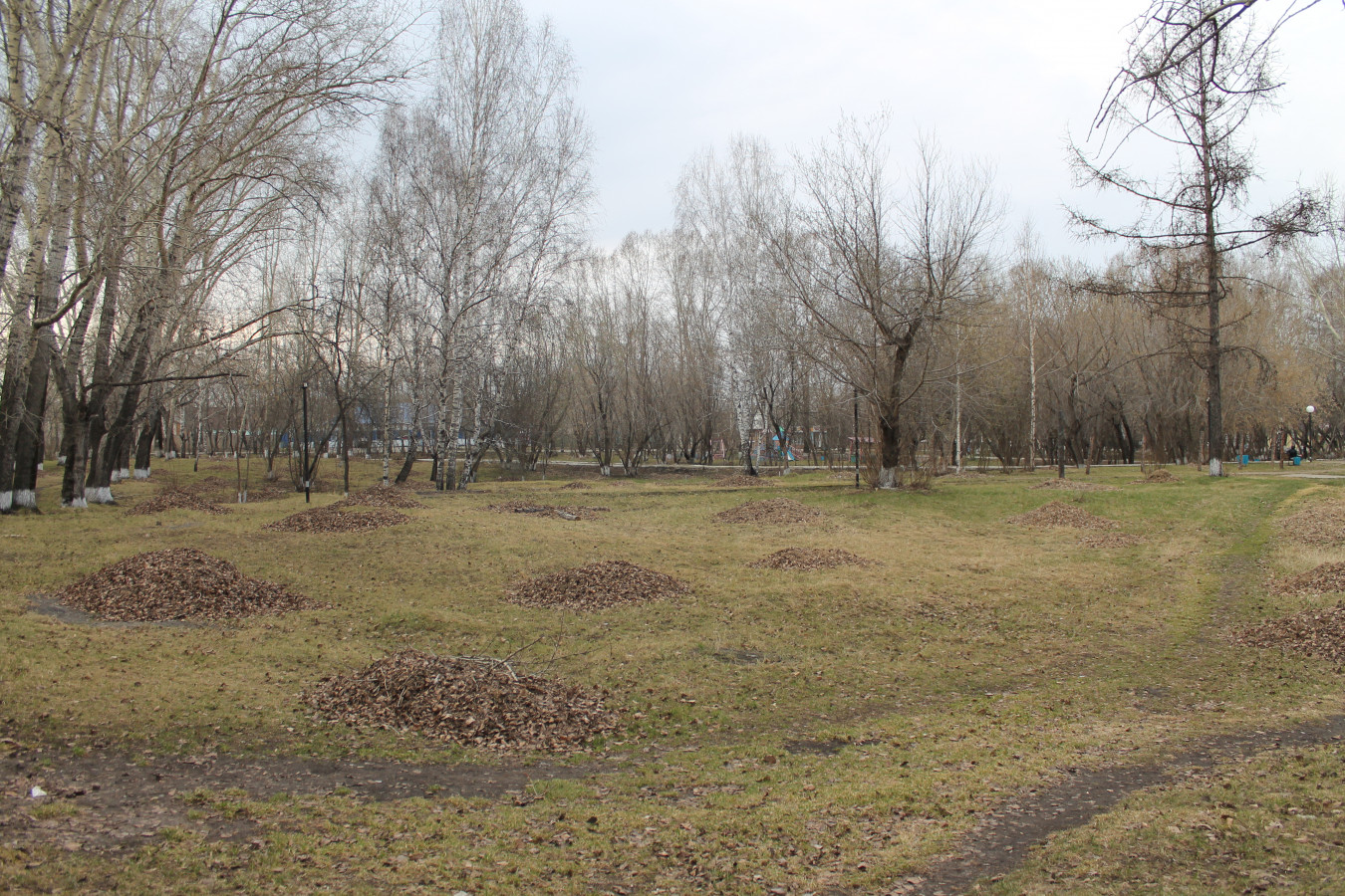 Листва в городском парке