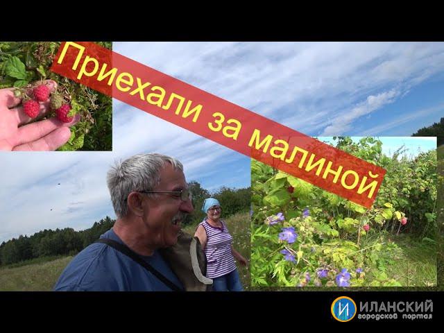 Приехали за малиной в исчезнувшую деревню Козловка.Иланский район,красноярского края.